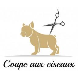 Coupe aux ciseaux pour chien