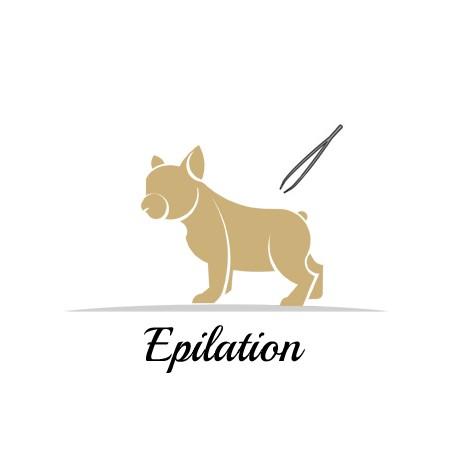 Epilation pour chien