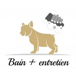 Bain + entretien de votre chien