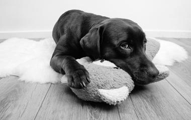 Jouets & gourmandises pour chien